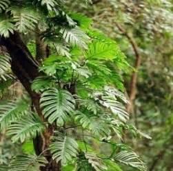 Tropical Rainforest Plant Facts - tropical rainforest plant facts
