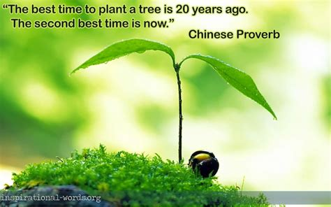 The Best Time To Plant A Tree When Is The Best Time To Plant A Vegetable Garden