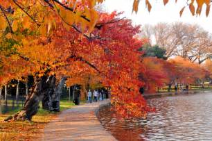 In Fall top 6 places in dc to photograph fall foliage washington photo