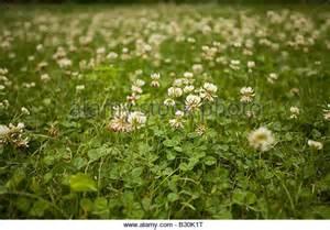 backyard full of weeds weed killer stock photos weed killer stock images alamy