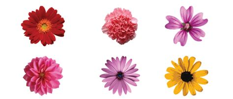 free floral images free vector flower illustrations