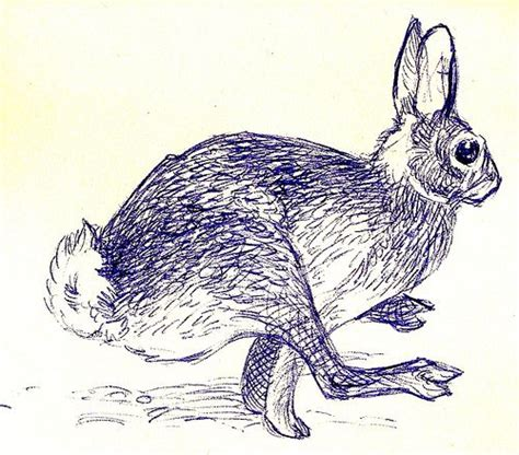 rabbit tattoo pen pen hare illustration illustrations