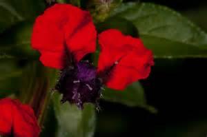 boutineer flowers bat flower