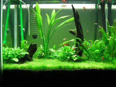 Tropical Fish Tank Ideas HOUSE DESIGN AND OFFICE : Fish Tank Ideas for Kids