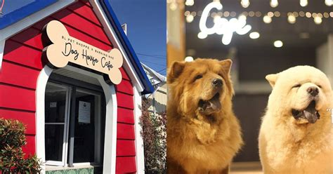 dog house cafe must visit the biggest dog house in the north booky