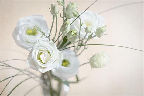lisianthus fiore lisianthus vedeta florariilor poate fi crescuta si acasa