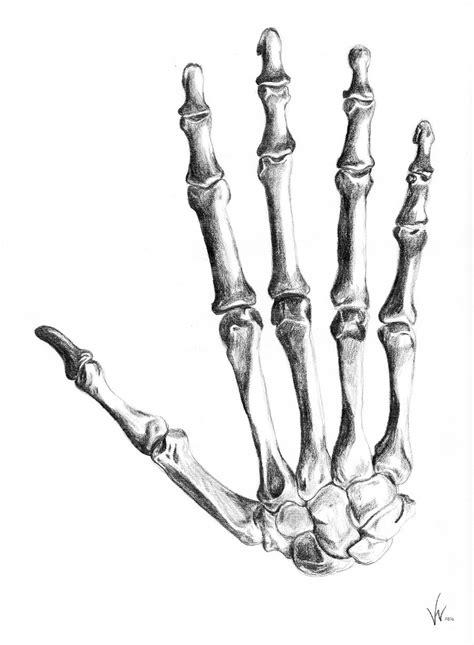 bone drawing bone by jpwendell on deviantart