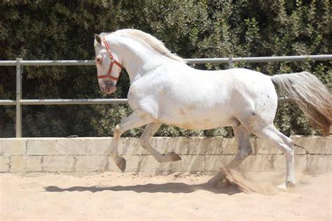 pferde suchen ein zuhause pferde in not gremlins suchen ein zuhause asociati 243 n aktion gremlin
