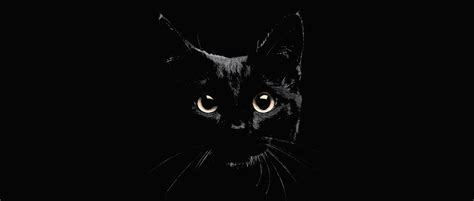national black day 2017 cats protection national black cat day