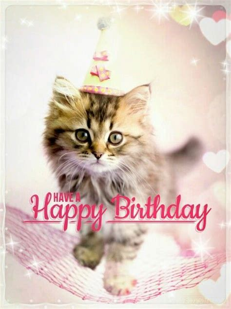 Cat Happy Birthday Meme - cat memes happy birthday cat memes funny cat memes