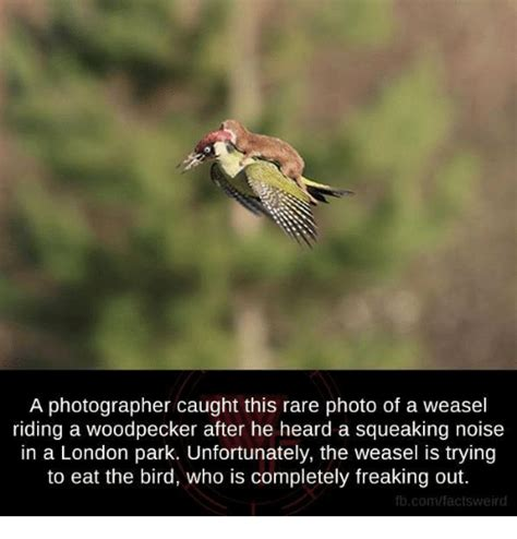 25 best memes about woodpecker woodpecker memes