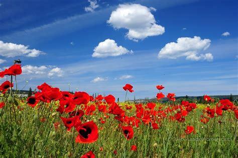 immagini di fiori per desktop bellissimi fiori viaggio sfondi primavera sfondi fiori