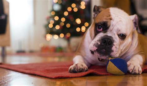 train  dog   chew  carpet
