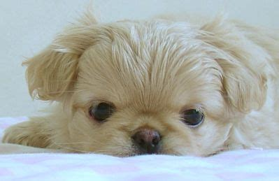 dish soap for fleas on puppies how to get rid of fleas on puppies bathe them in a warm bath with dish