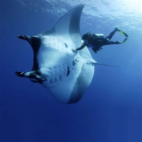 Amazing Animals Amazing Animal Pictures 120 Pics