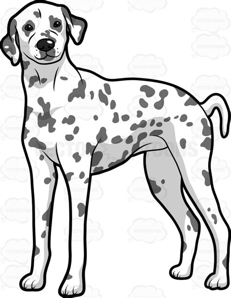 dogs with spots an with spots standing and alert clipart vector