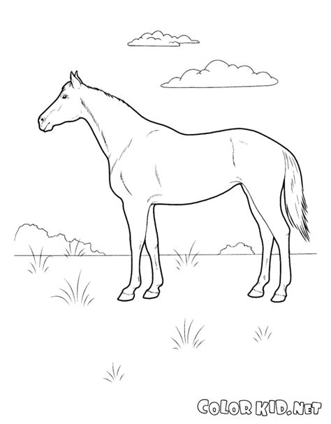 Coloring Page Dog On The Meadow Meadow Coloring Page