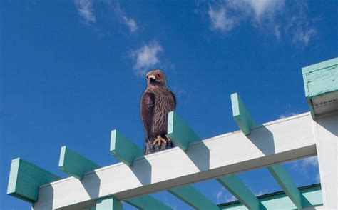 visual bird deterrents archives bird b
