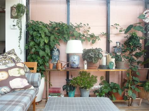 Plants In House top 15 air purifying house plants according to nasa