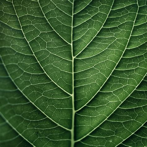 leaf pattern with lines organic lines lineas pinterest organic art drawings