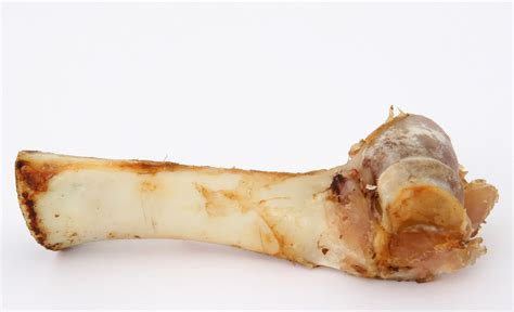 what happens if a eats a chicken bone human food for dogs 41 human foods dogs can and can t eat dogspie