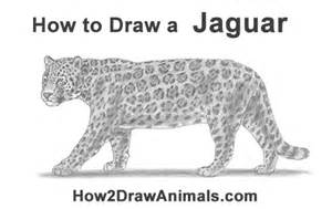 How To Draw A Jaguar How To Draw A Jaguar