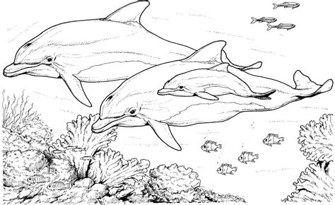 Free Dolphin Coloring Pages Dolphin Color Pages