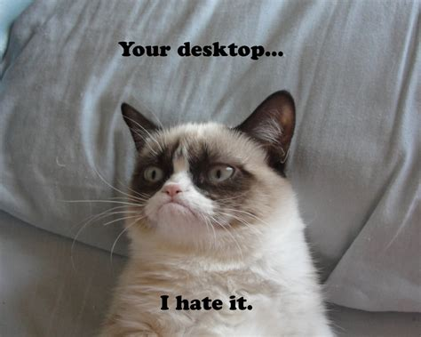 1280x1024 wallpaper cat 1280x1024 grumpy cat desktop pc and mac wallpaper