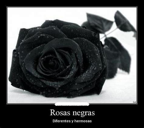 imagenes negras de dolor im 225 genes de rosas negras de luto para expresar duelo