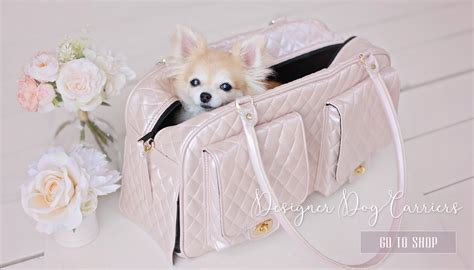 teacup puppy boutique teacup puppies for sale at teacups puppies and boutique