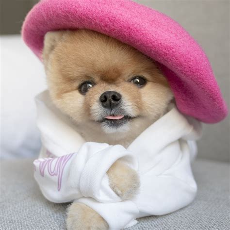 what of is jiffpom jiffpom jiffpom