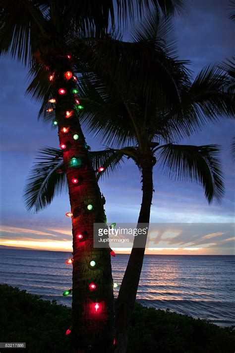 Christmas Lights On Palm Tree Stock Photo Getty Images Lights On A Palm Tree