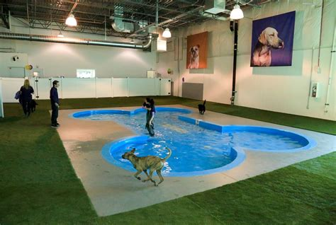 puppy play area denver doggie daycare paradise 4 paws