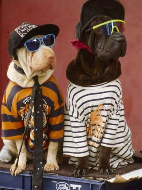 coolest dogs cool dogs pictures of animals