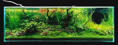 aquascaping layouts takashi amano s 180x60x60cm triangular driftwood aquascape