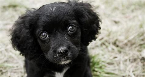 what to look for when buying a puppy dogs trust advises on what you should look for when you are buying a puppy dogs trust