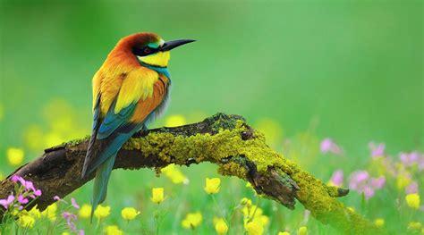 imagenes para fondo de pantalla raras imagenes de aves exoticas para fondo de pantalla hd