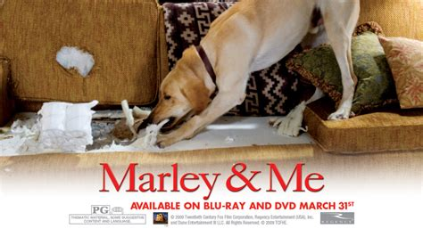 marley and me marley and me images marley and me hd wallpaper and background photos 5315811