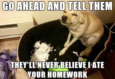 Funny Caption Memes - 30 funny animal captions part 15 30 pics amazing