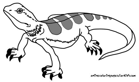 free printable coloring pages lizard coloring pages of a lizard coloring home