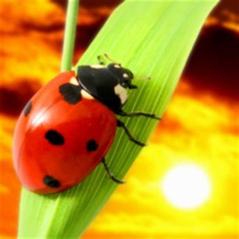 how to keep ladybugs out of house 14 great ways to keep spiders out of your home naturally