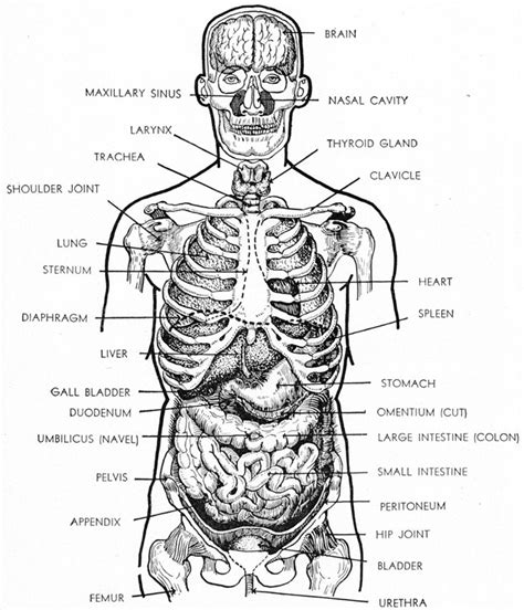 file diagram showing the parts of the body the lymphatic preliminary training part 5