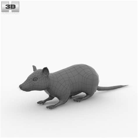 3d Rat Model