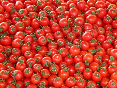 passata di pomodoro fatta in casa passata di pomodoro fatta in casa in 10 mosse idee green