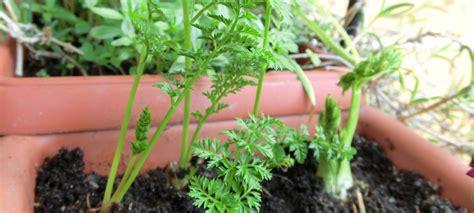 orto in terrazzo fai da te orto in terrazzo fai da te emilia romagna boom dell orto