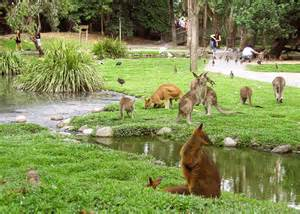 Backyard Habitats Circuit 224 Cape Tribulation Au Ferntree Rainforest Resort