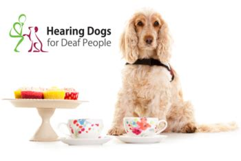 hearing loss in dogs hearing dogs community day in belfast hearing link