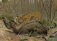 How Often Do Jaguars Eat Jaguar Panthera Onca Details Encyclopedia Of