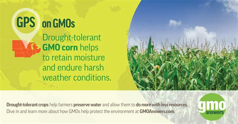 gmoanswers your questions on health and safety of gm food and crops gmo images images hd