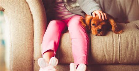 pet insurance  work metlife